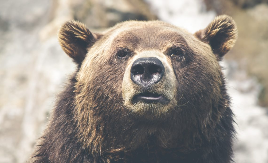 Bitcoin (BTC) Bear Market Isn't Over? Industry Analysts Duke It Out
